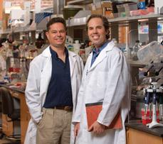 L'impact du cannabidiol sur les cellules métastasées dans regard sur le cancer Pierre-Sean