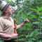L'huile de cannabis de Rick Simpson