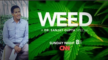 Actualités du cannabis médical, Novembre 2013 Alchimia Web