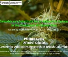 Cannabis and opiates. Philippe Lucas.