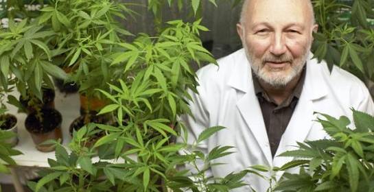 Santé : cannabis sur ordonnance – Le Parisien 19/11/2013