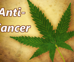 Marijuana Compounds Can Kill Some Cancer Cells: Study 10 – 2013