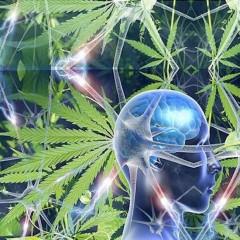 Cannabis : préventif des lésions cérébrales ?