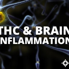 Study: Ultra-Low Doses Of THC May Help Protect Against Neurodegenerative Disease