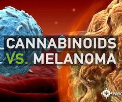 Study: Cannabinoids Found in Cannabis May Decrease the Viability of Melanoma Cells