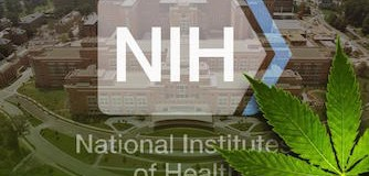 Why The NIH May Be Investigating Cannabinoids For Possible Cancer Treatment