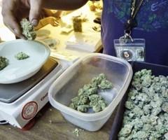 Cannabis thérapeutique : pour les malades, c'est une délivrance. Et si c'était vous ?