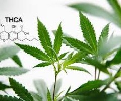 Températures de vaporisation des cannabinoïdes et propriétés thérapeutiques