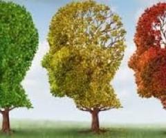 CB2 Receptors Help Treat Alzheimers, Dementia and M.S, New Study Finds