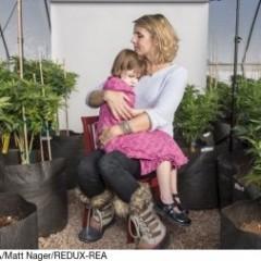 Cannabis et épilepsie, l'espoir à petits pas
