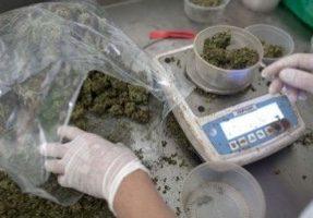 VIDEO. Des malades réclament la possibilité de consommer du cannabis pour soulager la douleur
