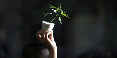 La Commission nationale des droits de l'homme prône la dépénalisation de l'usage du cannabis en France