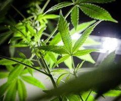 En direct du monde. En Israël, un salon ouvre ses portes sur le cannabis thérapeutique