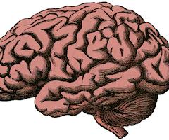 Le cannabis pourrait contrer le vieillissement du cerveau