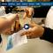 Uruguay : la vente de cannabis en pharmacie décolle