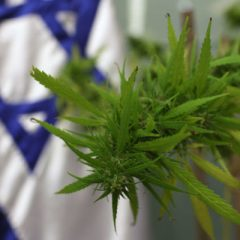 Reportage complet : Israël : cannabis, la terre promise