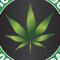 ALLEMAGNE : SANTE – Où en est le projet du cannabis à usage médical ?