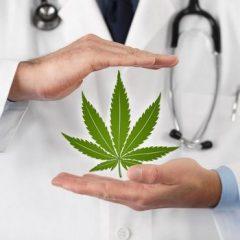 Le cannabis thérapeutique contre la dépendance aux opioïdes