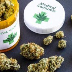 Cancer : les oncologues recommandent le cannabis thérapeutique à leurs patients sans savoir si ça fonctionne
