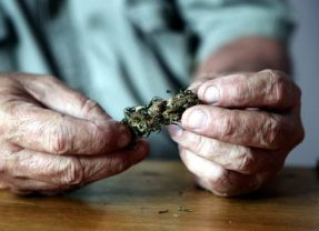 En direct du monde. En Californie, le cannabis rend accro les seniors