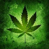 Les cannabinoïdes en médecine – Version PDF