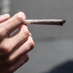 """Aniche : un couple condamné pour consommation """"thérapeutique"""" de cannabis"""