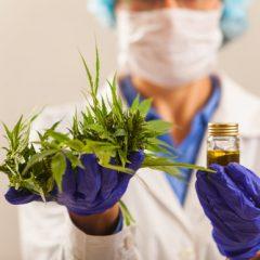 Exclusif : les professionnels de santé favorables à la délivrance de cannabis sur ordonnance