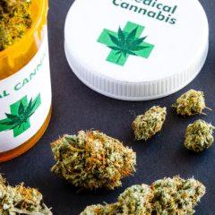 Cancer du pancréas : le cannabis médical augmenterait l'espérance de vie
