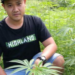 La Malaisie et la Thaïlande parlent de légaliser le cannabis médical