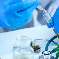 Le cannabis au CBD n'est pas une panacée pour les maux qui nous affectent, déclarent les experts de l'Université de l'Alberta