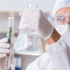 Augmentation draconienne de la recherche scientifique sur le cannabis médical