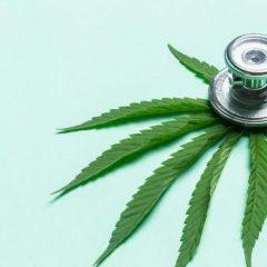 Cinq questions sur le cannabis thérapeutique, en voie d'autorisation en France
