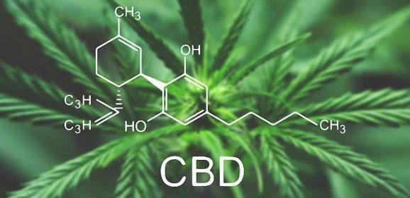 Bulletin Addictovigilance Cannabidiol – RESPADD