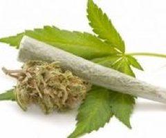Cannabis : quels effets réels sur la douleur ?