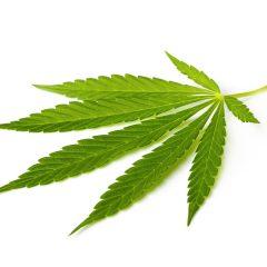 5 questions sur le cannabis thérapeutique