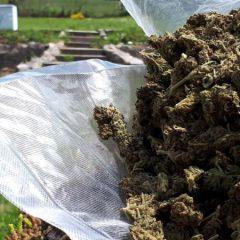 """Cannabis thérapeutique : """"Il n'est pas concevable que des patients se mettent dans l'illégalité pour pouvoir se soigner"""""""