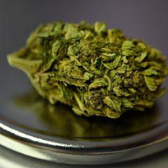 """Cannabis: les professionnels du chanvre regrettent un """"flou juridique"""" en France qui """"freine l'industrie"""""""