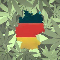 L'Allemagne veut éliminer l'usage des fleurs de cannabis médicinales