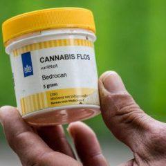 Cannabis thérapeutique : les patients se fédèrent dans un collectif