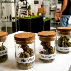"""Le cannabis thérapeutique sera expérimenté en France """"dans les prochaines semaines"""""""