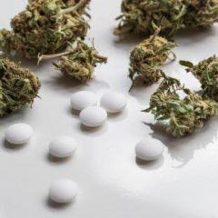 Cannabis thérapeutique : les associations de patients satisfaites par le projet d'expérimentation