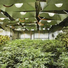 Le Royaume-Uni sur la voie de la production domestique de cannabis médical