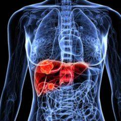 Etude : à forte dose, le CBD pourrait être toxique pour le foie