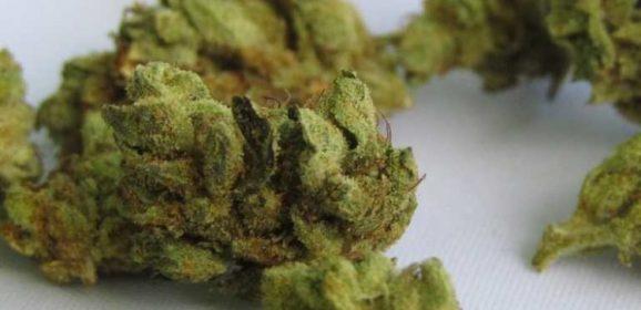 Étude : Le cannabis pour traiter les symptômes du trouble obsessionnel compulsif (TOC)