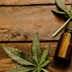 Le cannabis thérapeutique intéresse un géant mondial de la pharmacie