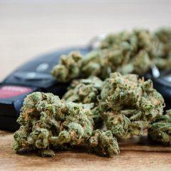 Finlande : être dépisté positif au cannabis au volant ne sera plus systématiquement une infraction