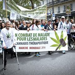L'essor – Notre focus en libre lecture : cannabis thérapeutique, lancement de l'expérimentation en 2020
