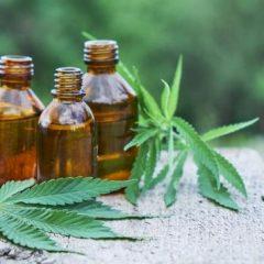 Cannabis : une molécule bloque les effets psychiatriques secondaires du THC