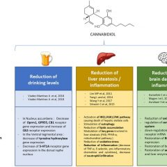 Therapeutic Prospects of Cannabidiol for Alcohol Use Disorder and Alcohol-Related Damages on the Liver and the Brain