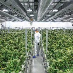 Les géants mondiaux du cannabis visent maintenant l'Europe